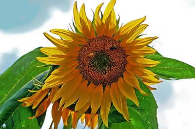 Yellow Sunflower Art Print by Susan Leggett