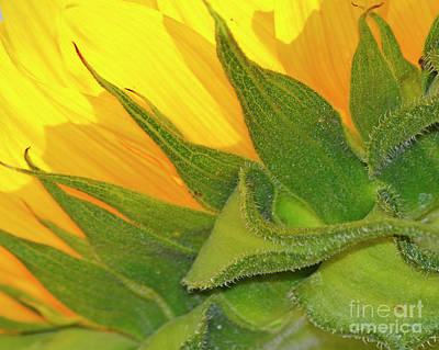 Photograph - Yellow by Traci Cottingham