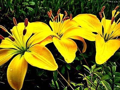 Yellow Triad Of Lilies Art Print by Kevin D Davis