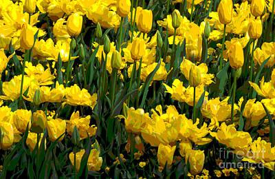 Digital Art - Yellow Tulips 2 by Fran Woods
