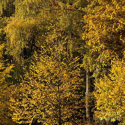 Buche Photograph - Yellow Wall by Katja Zuske