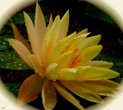 The View Mixed Media - Yellow Waterlily Macro by Debra     Vatalaro