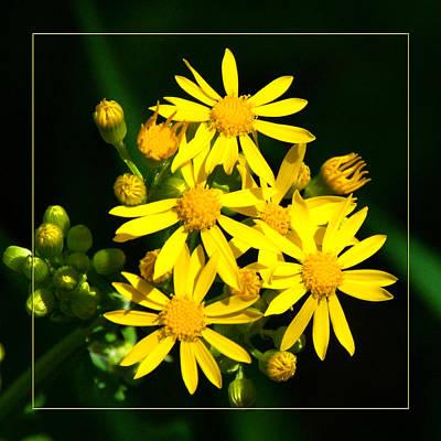 Photograph - Yellow Wild Flower by Robert Clayton