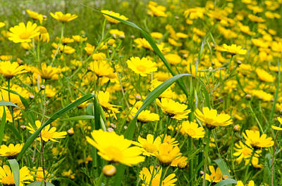 On Trend At The Pool - Yellow wildflowers by Michael Goyberg