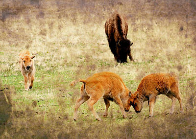 Yellowstone Digital Art - Yellowstone Bison by Ellen Heaverlo