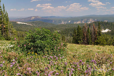 Photograph - Yellowstone Caldera Rim From Dunraven Pass by Charles Kozierok