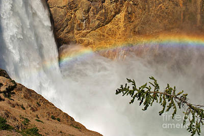 Photograph - Yellowstone Lower Falls - Curves And Colors by Charles Kozierok