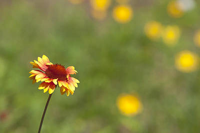 Photograph - Yep...a Flower by John Crothers
