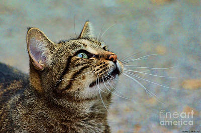 Photograph - Yes I Am A Pretty Kitty by Debbie Portwood