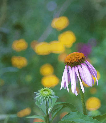 Art Print featuring the photograph Yet Another Flower by John Crothers