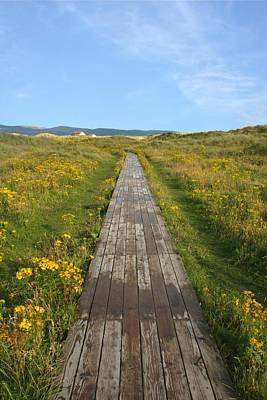Photograph - Ynyslas Walkway by Ed Lukas