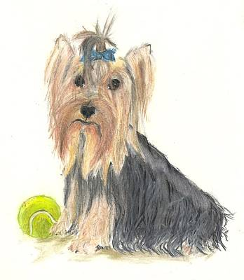 Tennis Ball Drawing - Yorkie Indy At Play by Jessica Raines