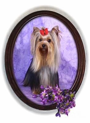 Yorkie With Violets Art Print by Maxine Bochnia
