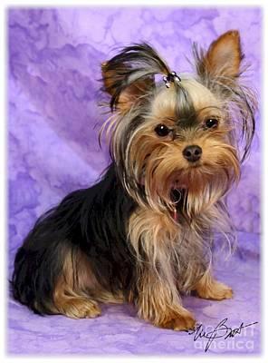 Pups Digital Art - Yorkshire Terrier Pup by Maxine Bochnia