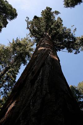Photograph - Yosemite 0173 by Rich Berrett