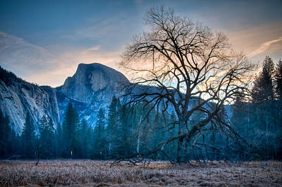 Photograph - Yosemite Valley Half Dome Lone Tree by Connie Cooper-Edwards