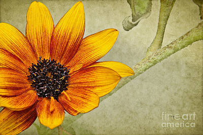 Digital Art - You Are My Sunshine by Lois Bryan