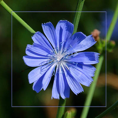 Photograph - You Call This A Weed? by Robert Clayton