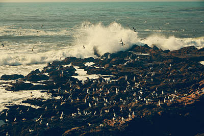 Cambria Photograph - You Came Crashing Into My Heart by Laurie Search
