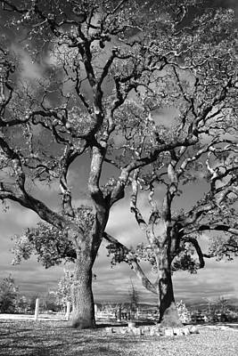 Oak Photograph - You Never Let Me Down by Laurie Search