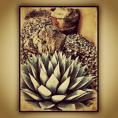 Plant Wall Art - Photograph - Young Agave by Paul Cutright