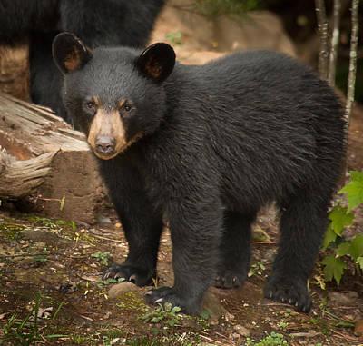 Photograph - Young Bear by Joye Ardyn Durham