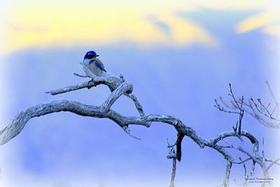 Photograph - Young Blue Jay In Winter by Randall Thomas Stone