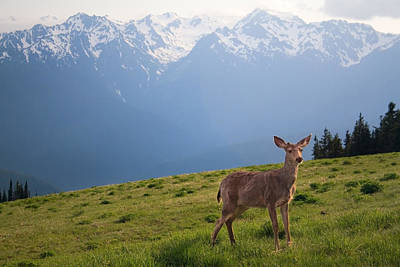 Olympic National Park Digital Art - Young Buck And Mt. Olympus Peaks At Hurricane Ridge by Stacey Lynn Payne