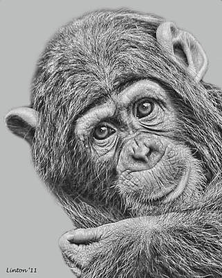 Chimpanzee Digital Art - Young Chimp 5 by Larry Linton