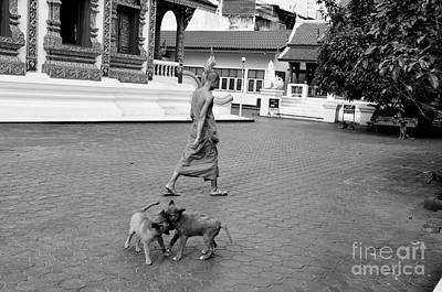 Photograph - Young Dogs by Dean Harte