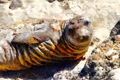 Young Elephant Seal  . 7d16091 Art Print