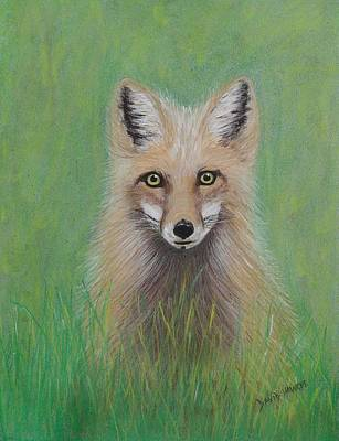 Painting - Young Fox by David Hawkes