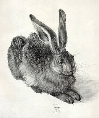 Young Hare, By Durer Art Print by Sheila Terry