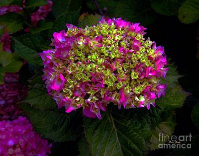 Digital Art - Young Hydrangea by Dale   Ford