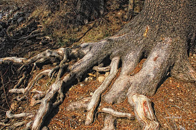 Tree Roots Photograph - Your Roots Are Showing by Donna Blackhall