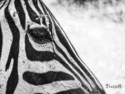 Photograph - You've Got Zebra Eyes by Traci Cottingham