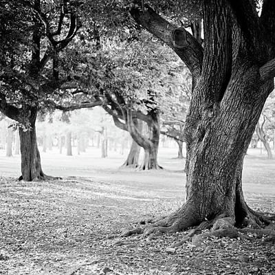 Shibuya Photograph - Yoyogi Park, Japan, Tokyo by H-pom