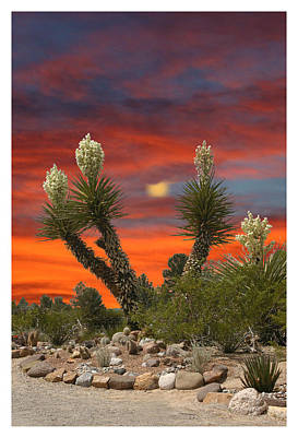 Photograph - Yucca Blooming Sunset-moonset by Jack Pumphrey