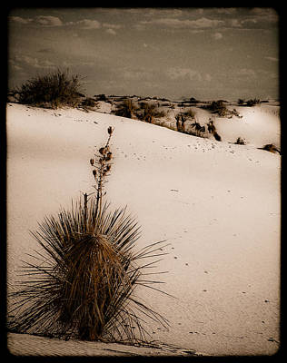 White Sands, New Mexico - Yucca Art Print