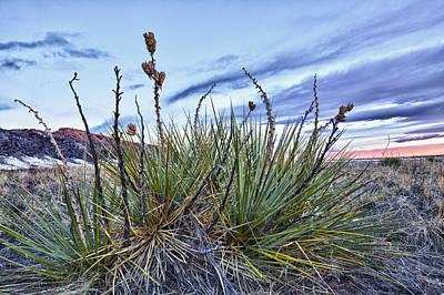 Photograph - Yucca Sunrise II by Adam Pender