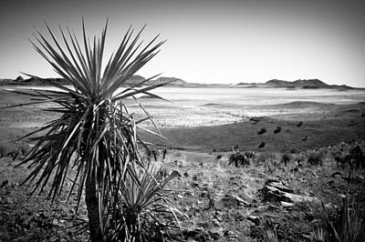 Yucca With A View Art Print