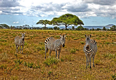 Photograph - Zebra And Friends by Marie Morrisroe
