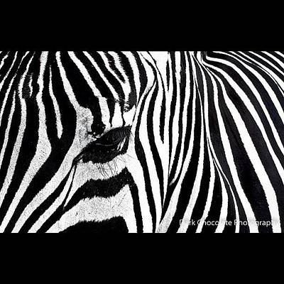 Surface Wall Art - Photograph - Zebra Lines by Zachary Voo