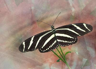 Photograph - Zebra Longwing Butterfly-3 by Rudy Umans
