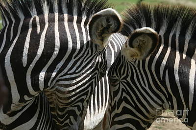 Zebra Lovers Art Print by Carol Wright