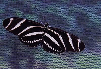Zebra Netting Original by Warren Thompson
