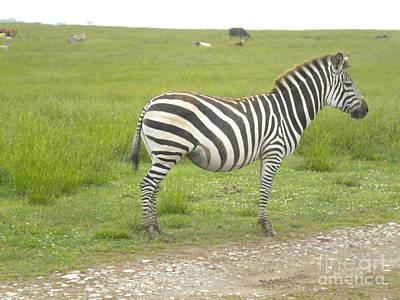 Zebra Print Art Print by Tessa Priddy