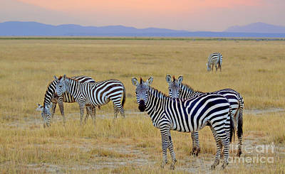 Zebras In The Morning Art Print by Pravine Chester