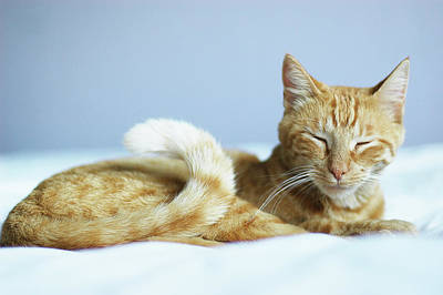 Eyes Closed Photograph - Zen Kitty by Cindy Loughridge