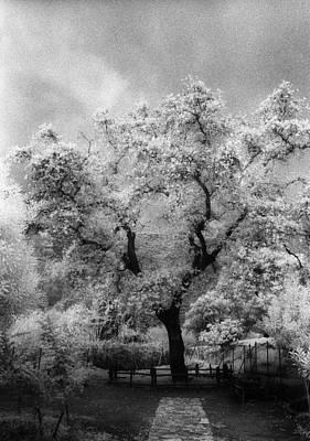 Soap Suds - Zeus Plane-tree by Andonis Katanos